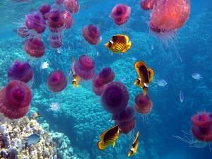 Postal: Medusas rosas y peces tropicales bajo el agua