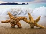 Dos estrellas de mar en la arena de una playa