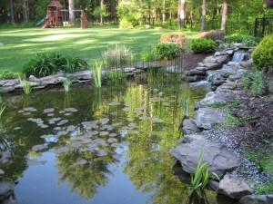 Postal: Pequeño estanque en un parque