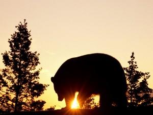 Un gran oso caminando al atardecer