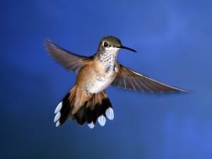 Postal: Un colibrí en el aire