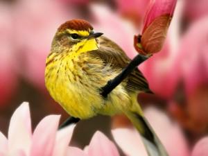 Curruca sobre el tallo de una flor