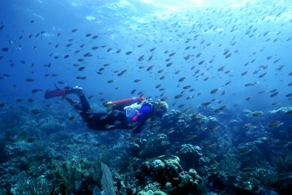 Buceando entre pequeños peces