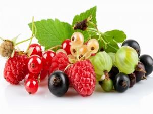 Bayas y frutos rojos