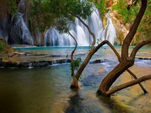 Postal: Un árbol en el río cerca de las cascadas