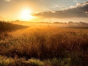 Los rayos del iluminan un campo sembrado