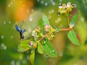 Libélula sobre una rama con hojas y gotitas de agua