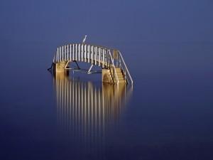 Pájaro sobre un puente en el agua