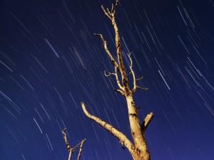 La lluvia cae sobre los árboles desnudos