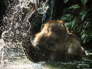 Postal: Elefante jugando en el agua