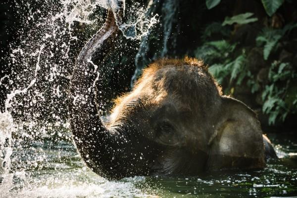 Elefante jugando en el agua