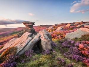 Atractivo paisaje con piedras y flores