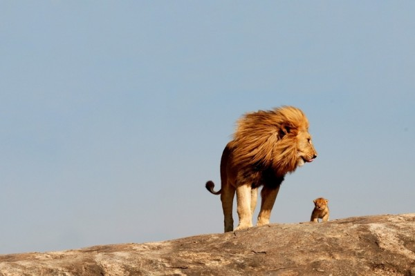 Siguiendo a papá