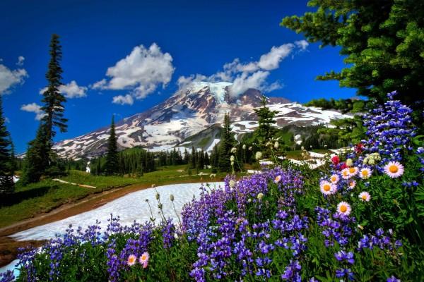 Llega la primavera a las montañas