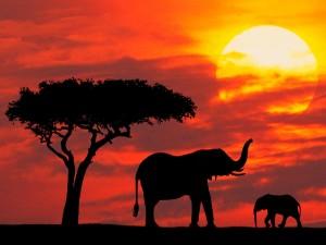 Postal: Pequeño elefante y su madre vistos al atardecer