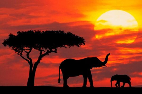 Pequeño elefante y su madre vistos al atardecer