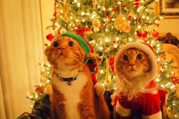 Gatos disfrazados junto al árbol de Navidad