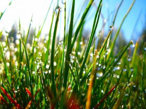 Pequeñas gotas de agua en las briznas de hierba