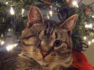 Un gato guiñando un ojo junto a las luces de Navidad