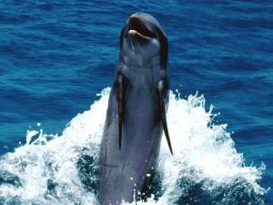 Un simpático delfín en el mar