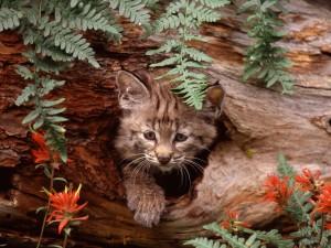 Un pequeño gato montés en el hueco de un tronco