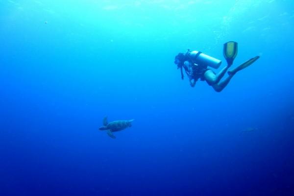 Buzo siguiendo a una tortuga