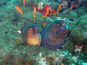 Dos morenas en el lecho marino