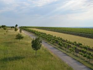 Postal: Carretera entre campos verdes sembrados