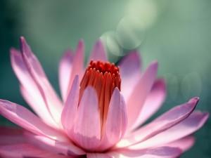 Una preciosa flor acuática