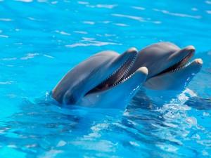 Dos simpáticos delfines mostrando sus pequeños dientes
