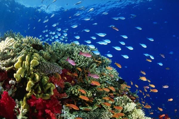 Pequeños peces de colores junto al arrecife de coral