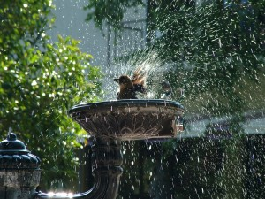 Postal: Un pájaro jugando con el agua de una fuente