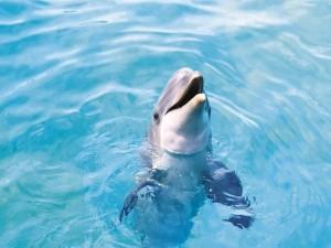 Un bonito delfín sacando la cabeza del agua