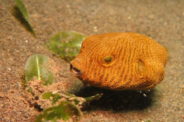 Un curioso pez buscando comida en el fondo