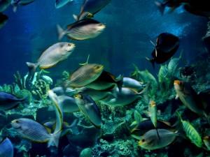 Peces rayados en un acuario