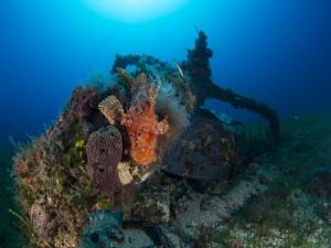 Un gran pez en la roca