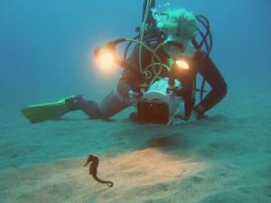 Buzo filmando a un caballito de mar