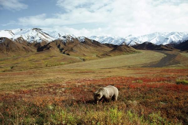 Un oso en la pradera