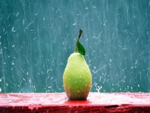 Pera bajo la lluvia