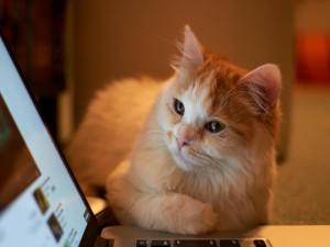 Gato observando la pantalla del ordenador