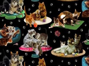 Gran variedad de gatos en sus alfombras
