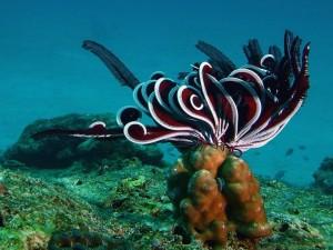 Animal marino en el fondo del océano