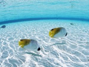 Postal: Peces nadando cerca de la playa