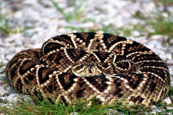 Una serpiente enroscada