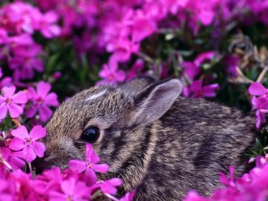 Postal: Un conejo entre las flores