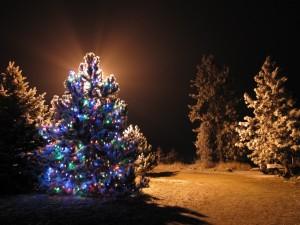 Un árbol de Navidad iluminado en el bosque