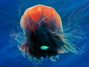 Postal: Medusa melena de león