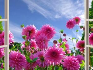 Postal: Admirando las flores a través de la ventana