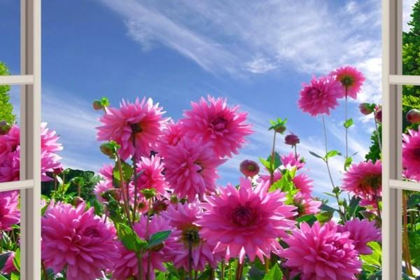 Admirando las flores a través de la ventana