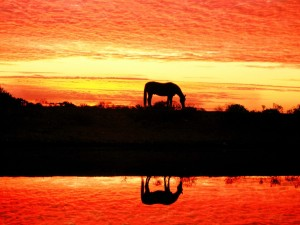 Un caballo reflejado en el agua al atardecer